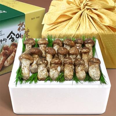 강원도 자연산 송이버섯 250g/상품 6~8뿌리(냉동)