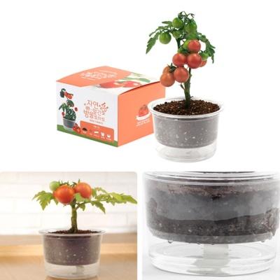 자동물공급 삼투압화분 방울토마토씨앗 흙 세트