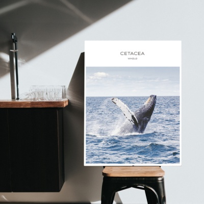 [오홀리브] 고래