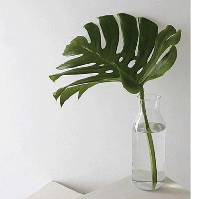몬스테라 공기정화 식물 인테리어 그린