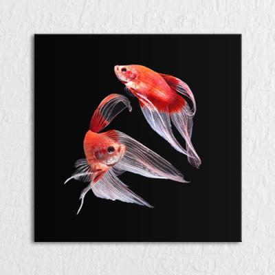 cq174-화려한물고기_소형노프레임