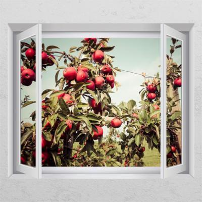 cl405-풍수를부르는사과나무_창문그림액자