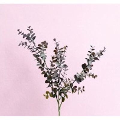 유칼립투스 인조나무 조화 인테리어 가짜나무 브라운