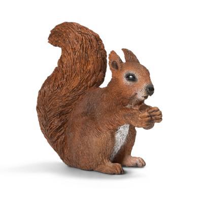 먹고 있는 다람쥐