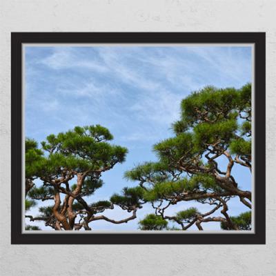 ij847-하늘과소나무_창문그림액자