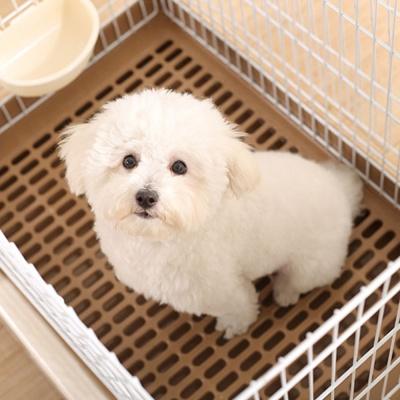 강아지 실내 화장실 케이지