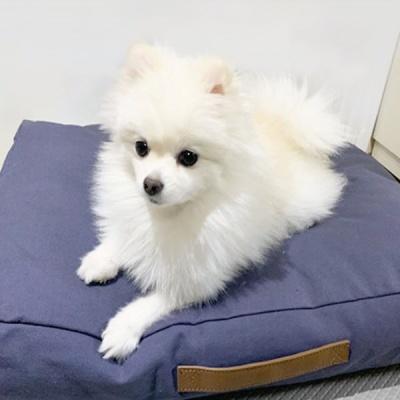 펫스마일 손잡이 사각베드 방석 (네이비) - pb