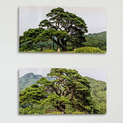 af855-폼아크릴액자38CmX18Cm_푸르른소나무