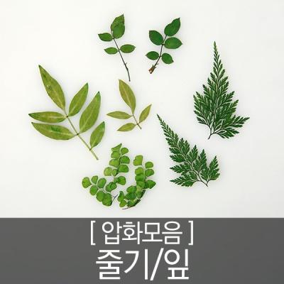 압화 꽃모음 - 줄기잎