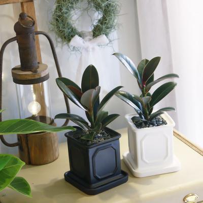 몰딩 화분 멜라니고무나무 공기정화식물