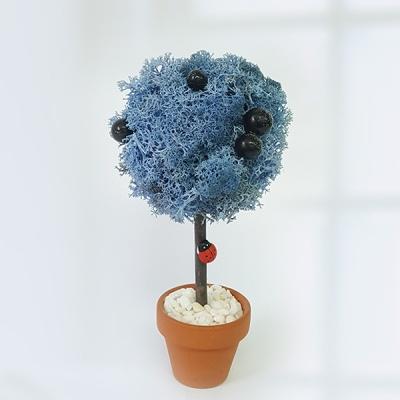 [공기정화식물] 스칸디아모스 나무 J_74
