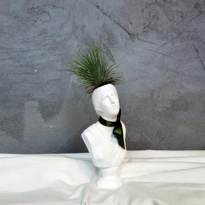 석고상화분 틸란드시아 안드레아나+모스+리본