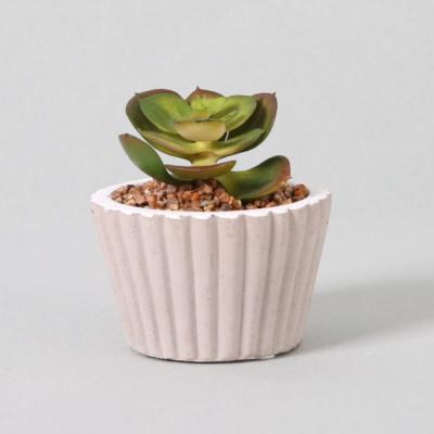 다육식물 다육이 미니화분 미니다육 11cm