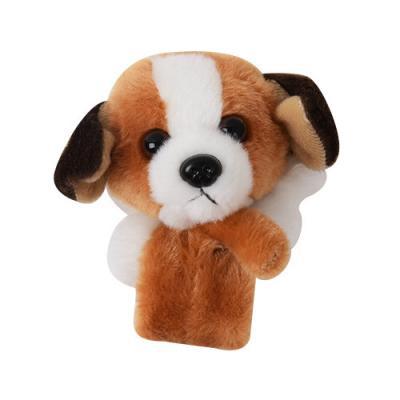 라운드펫 강아지