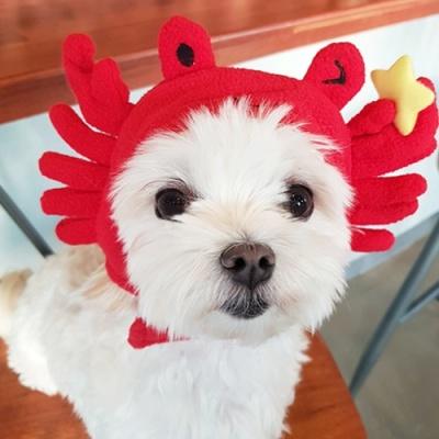 [갓샵 핵인싸템 강아지 꽃게모자] 귀여운 펫애견고양이 코스프레 댕댕이햇