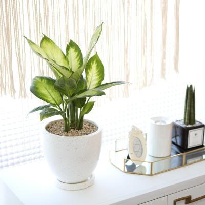 테라조 화분 마리안느 중형 공기정화식물
