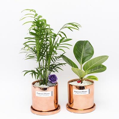 육각화분스탠드+Copper화분(고무나무) 세트
