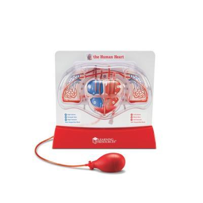 [러닝리소스] 심장박동모형(LER3535)