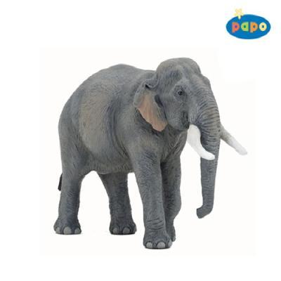 아시아코끼리
