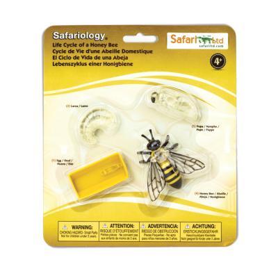 622716 꿀벌의성장과정 동물피규어 교육피규어