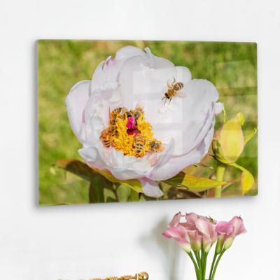 da228-폼아크릴액자58CmX38Cm_꿀벌과모란꽃