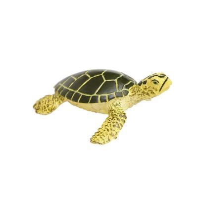 201329 아기푸른바다거북이 Green Sea Turtle Baby