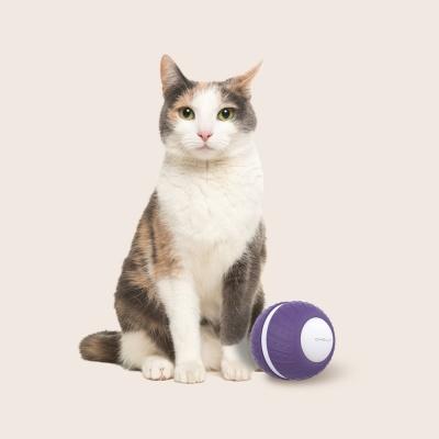 ABKO OHELLA PP03 고양이 자동 롤링볼