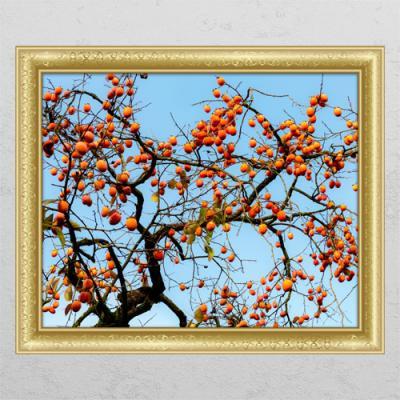 ta646-재물이쌓이는감나무01_창문그림액자