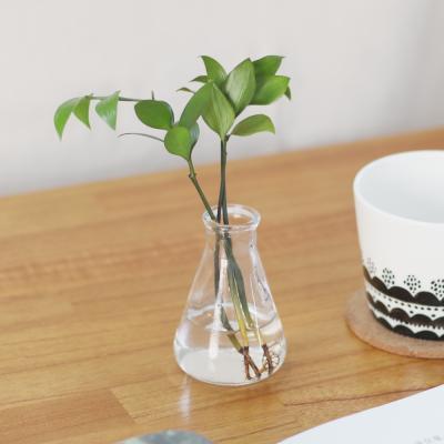 메이크정글 GLASSY NO.3 공기정화식물 유리병수경화분