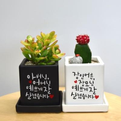 [캘리그라피] 컬러미니화분