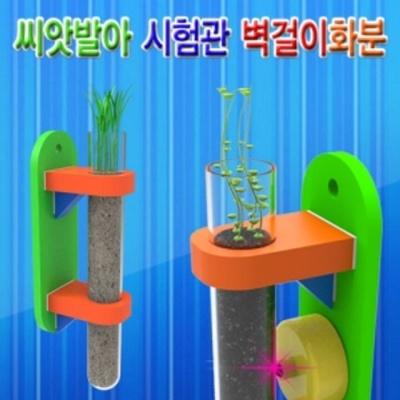 씨앗발아 시험관 보리 벽걸이화분 (1인용)
