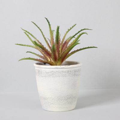 다육식물 다육이 미니화분 미니알로에 28cm