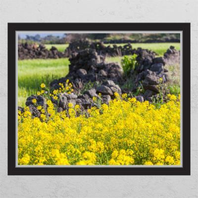 cd339-유채꽃과담벼락03_창문그림액자