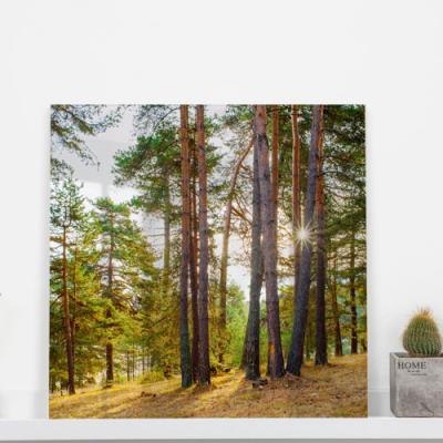 ta615-아크릴액자_햇살과자작나무숲(중형)