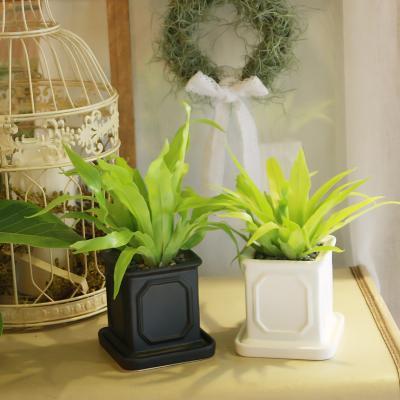 몰딩 화분 아비스 공기정화식물