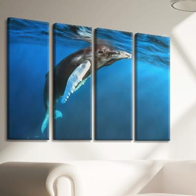 cx576-수영하는고래_대형노프레임세트