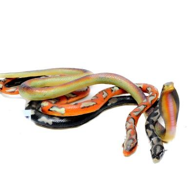 데코앤 소프트 뱀 (대)