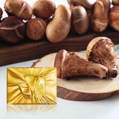 [향채움] 참송이버섯 1kg 선물세트