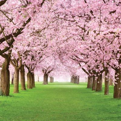 벚꽃나무 정원 [2000피스/직소퍼즐/PK2000-M3207]