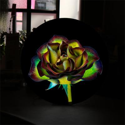ne522-LED액자45R_신비하고아름다운장미