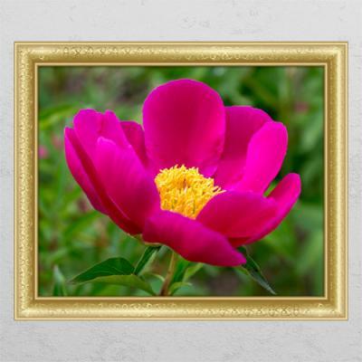ta638-풍수붉은모란꽃01_창문그림액자