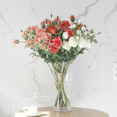 에스메랄다 장미  - 4color