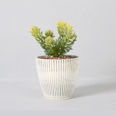 다육식물 다육이 미니화분 그린펫 18cm