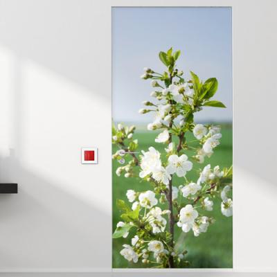 tm746-하얀벚꽃피는봄_현관문시트지