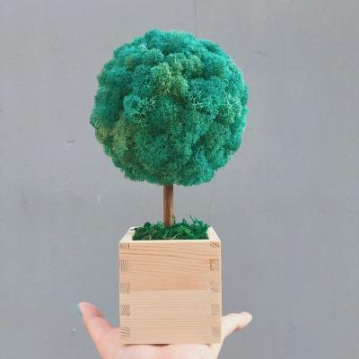 스칸디아모스 원목 나무 화분