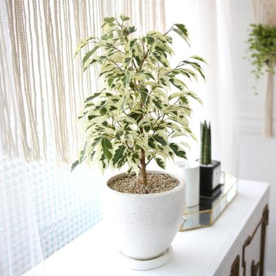 테라조 화분 무늬 벤자민 중형 공기정화식물