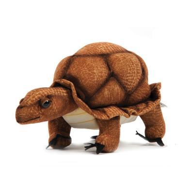3837번 거북이 Wood Turtle/30cm.L