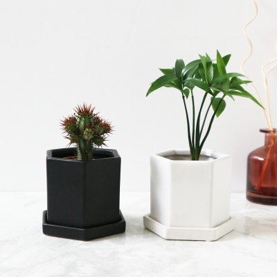 [2세트] 헥사 미니 화분-스투키/홍기린/죽백나무