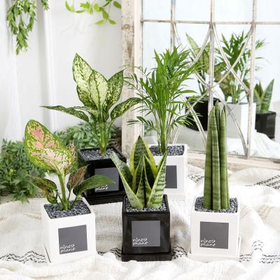 모던 화분 모음 실내공기정화식물 15종