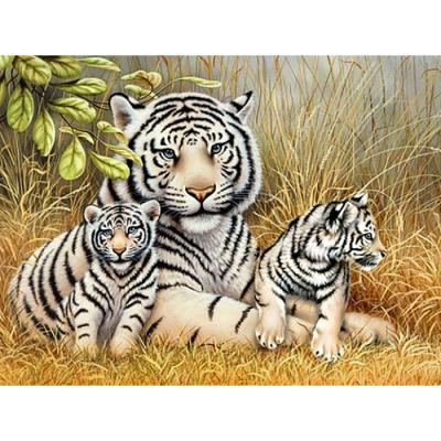 들판 호랑이 (패브릭) 보석십자수 40x50